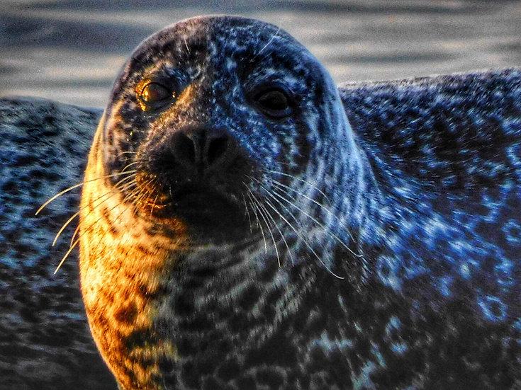 Seal enjoying last of Autumn sunset