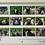 Thumbnail: 2022 Sheep Faces of Argyll Calendar