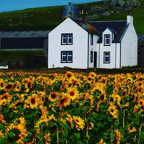 Flowers at Glencraigs farm Single Card