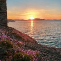 Sea Pinks At Sunset Crinan Argyll