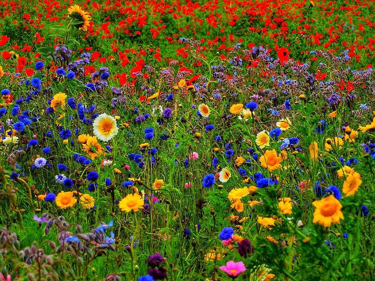 Flowers at Glencraigs Farm