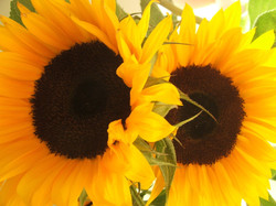sunflowers-1190902-1280x960.jpg