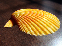 shell-orange-1198371-640x480.jpg