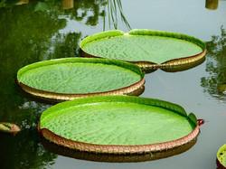 water-lilies-1408303-1280x960.jpg