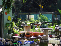 Ribblesdale Garden Nursery