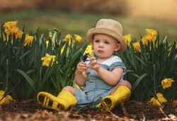 Toddler in Daffodils