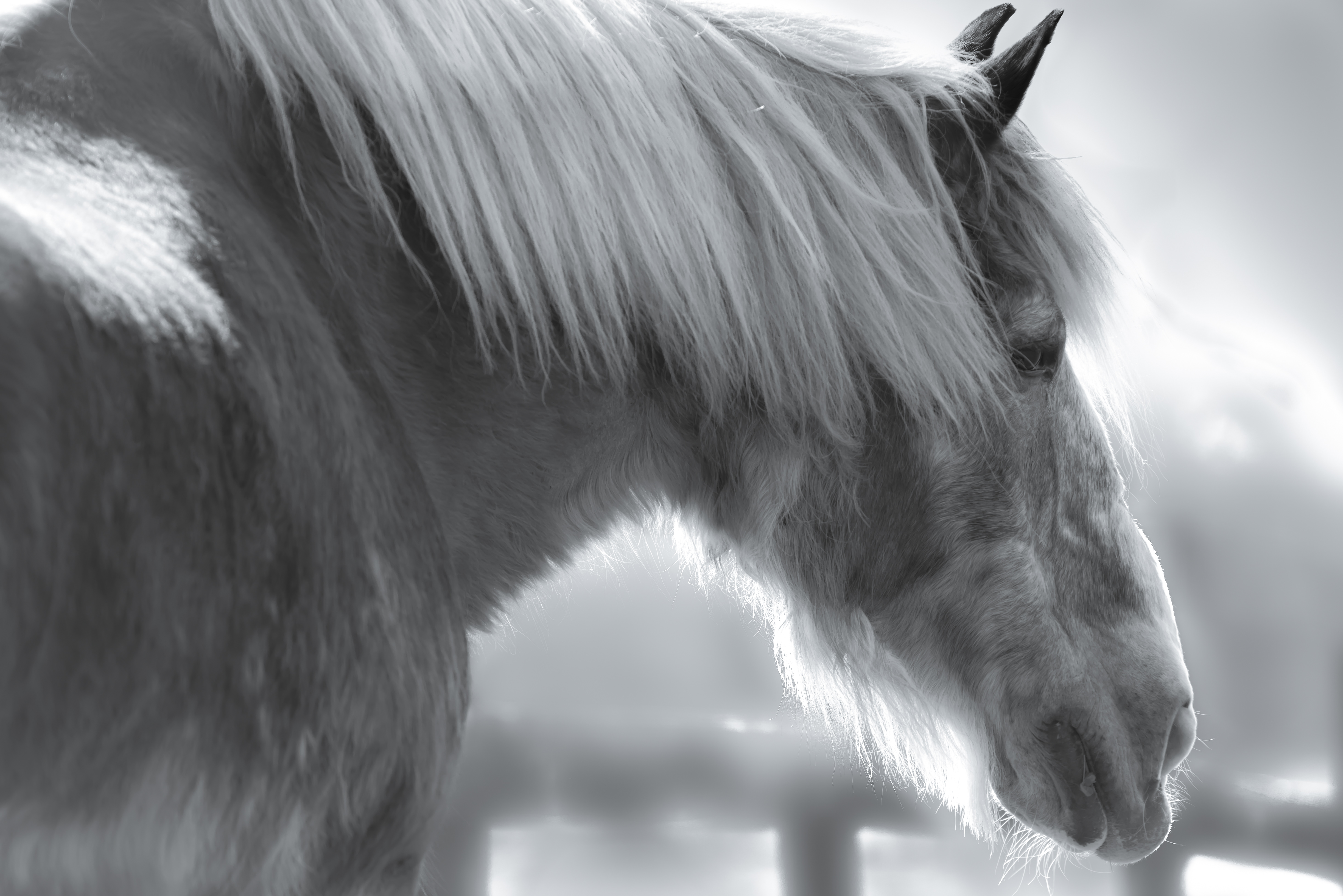Old Mare