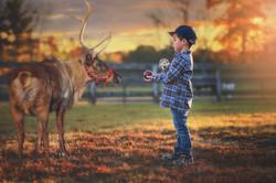 Boy Feeding Reindeer