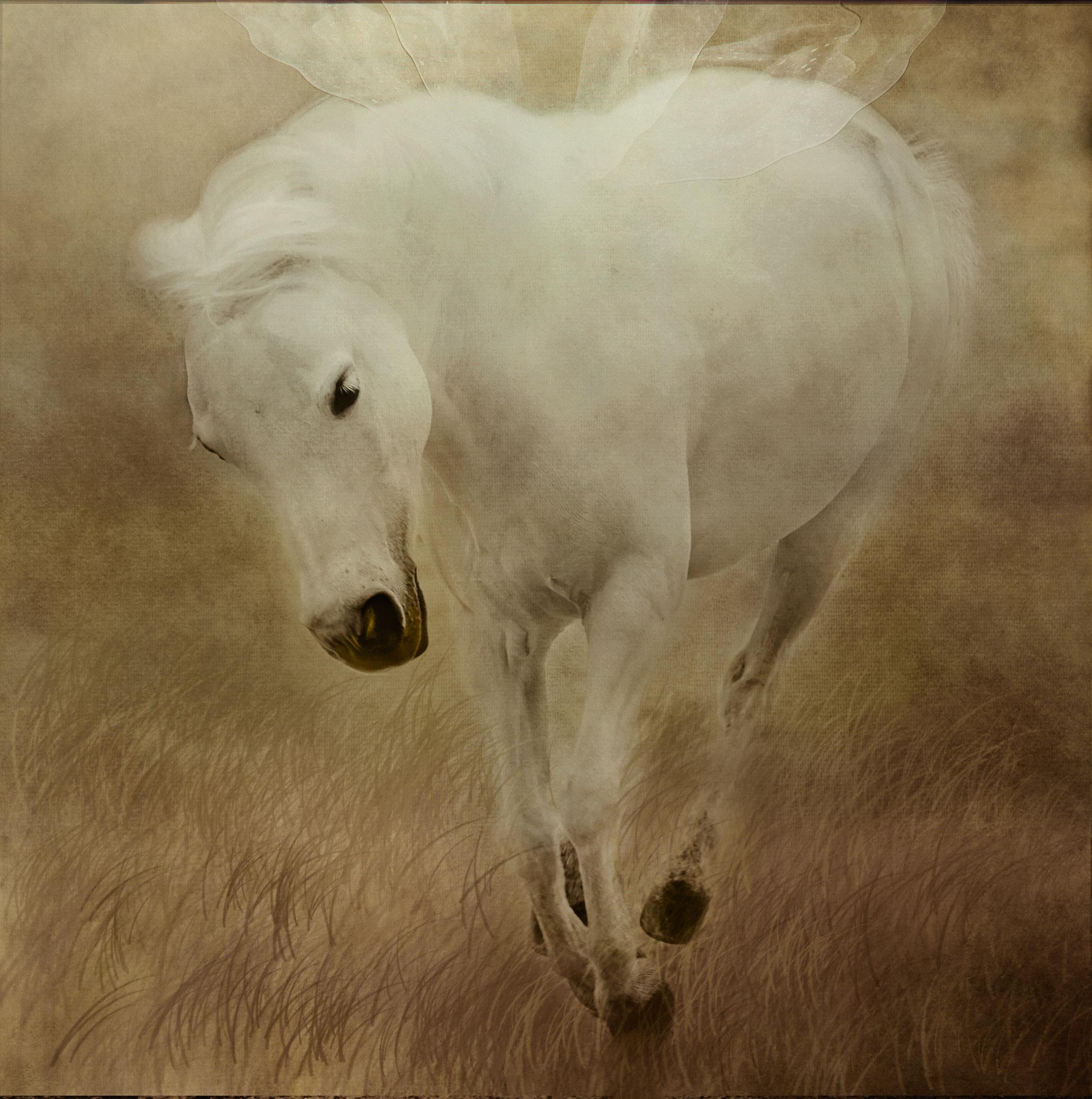 Painterly Horse