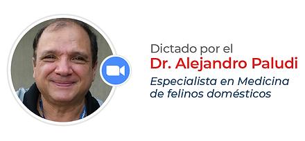 Dr. Paludi-44.png
