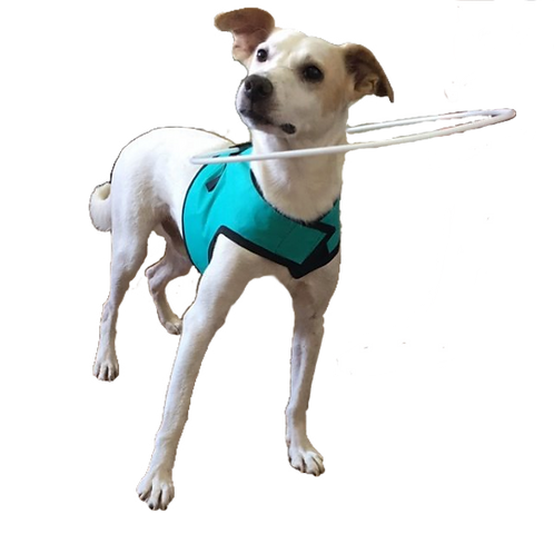 Arco Protetor para animais com Deficiência Visual
