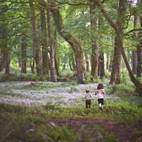 stellateddywoods.jpg