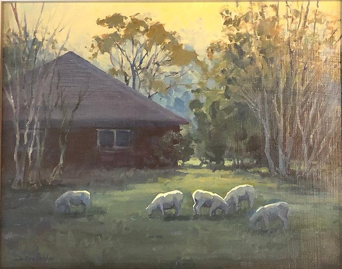 Susan Gallacher | Grazing Sheep