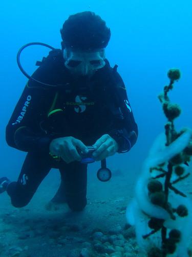 Oeufs de calamar/calamary eggs