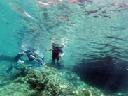 rethymno snorkeling, snorkeling skinaria, crete best snorkeling spot, ou faire du snorkeling en crete, rethymno scuba diving, kreta diving,