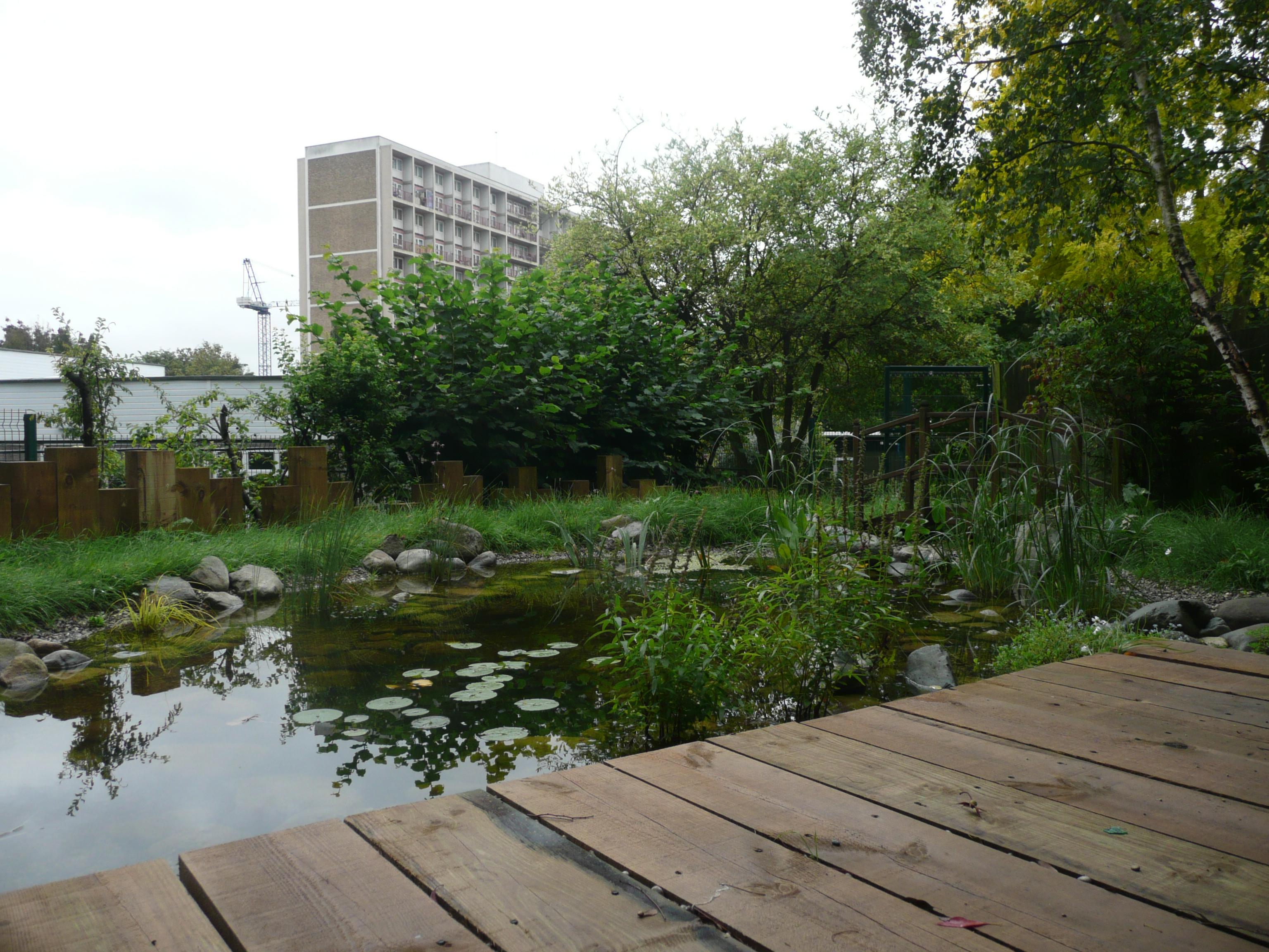 Wildlife Garden and Pond