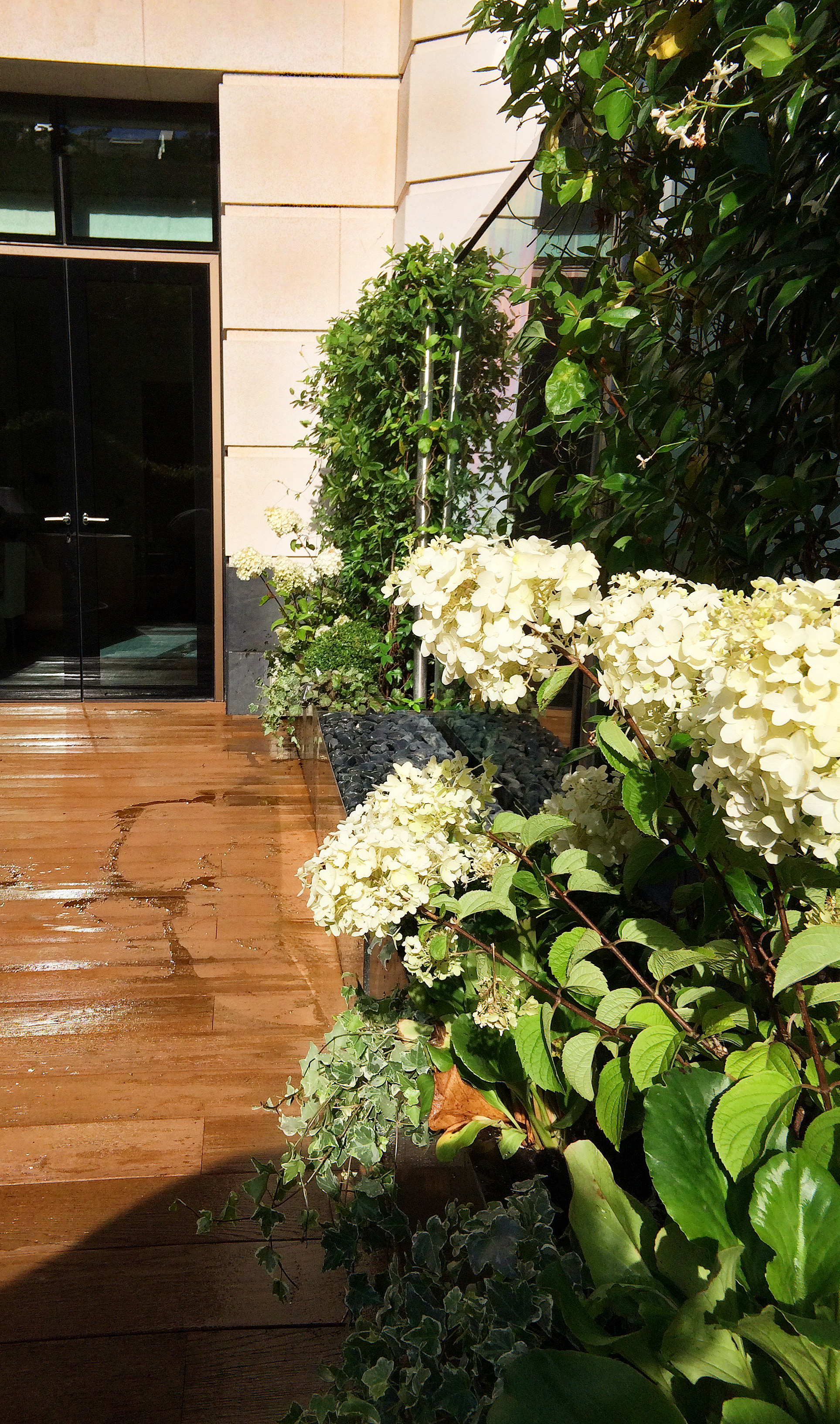 Planting and Maintenance Chelsea