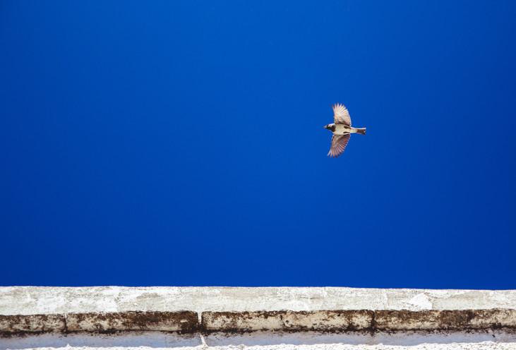 Takeoff.