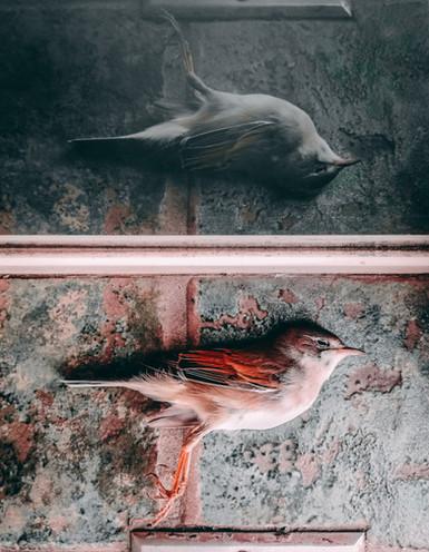 Where do birds go when they die?