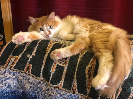 5 Tips for a Happy Healthy Cat