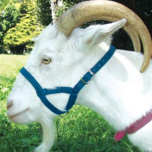 Miniature Goat Nylon Halter - Blue