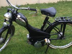 bima-noire-sur-gazon-droit-480x360.jpeg
