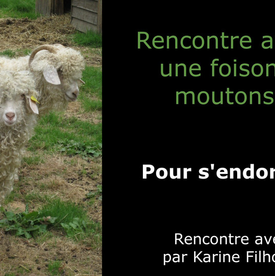 Rencontre avec... une foison de moutons