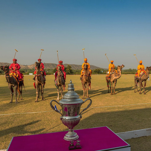 Camel Polo at Mundota
