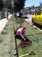 Recuperación de jardineras