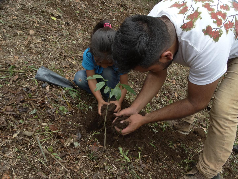 Plantación colectiva en la comunidad