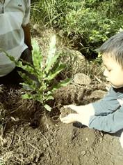 Árboles de macadamia