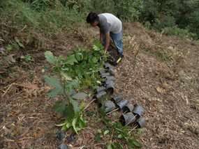 Reforestación alrededor de manantial
