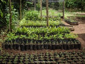 Reproducción de más de 100 especies de plantas