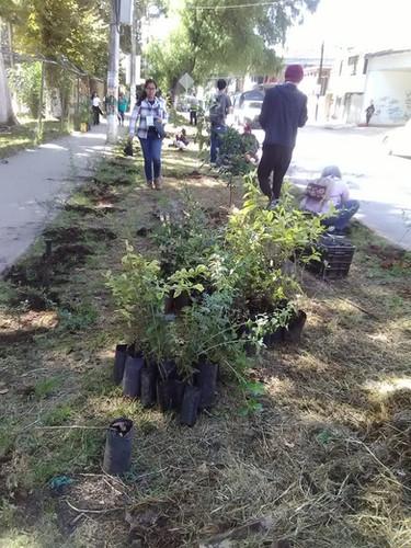 Primera jornada en la Luz del Barrio. Recuperación de jardineras