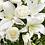 Thumbnail: Λίλιουμ με τριαντάφυλλα