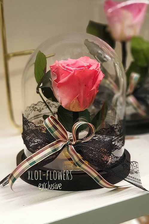 For Ever Rose Ροζ