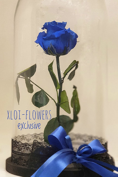 "For Ever Rose ""Blue Mystic"""
