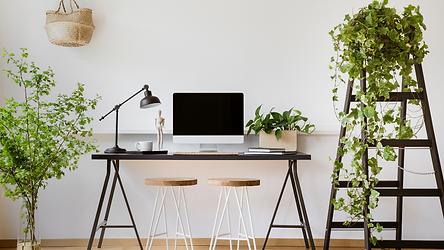 Office flowers & plants