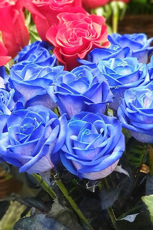 Εκατοντάφυλλα (Ecuador Roses)