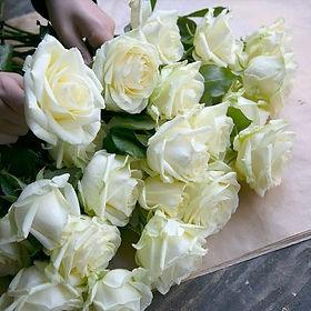 Τριαντάφυλλα λευκά