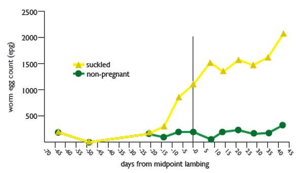 Sheep-Graph.jpg