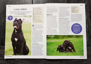 Dog Life Magazine Feature