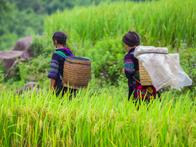 Hà Nội ban hành cơ sở xác định hộ gia đình dân tộc thiểu số và miền núi thiếu đất sản xuất