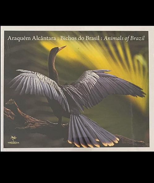 ARAQUEM ALCANTARA: BICHOS DO BRASIL: ANIMALS OF BRAZIL