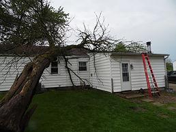 tree on roof.JPG
