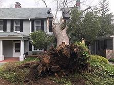 tree on home.jpg