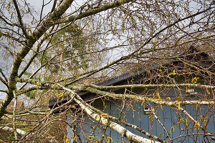 tree on shed.jpg