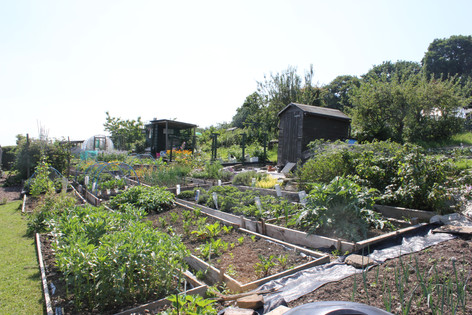 Ash Road Allotment - Plot.JPG