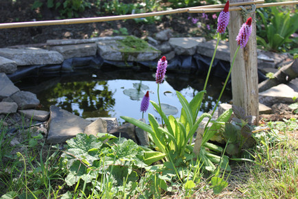 Wildlife pond.JPG