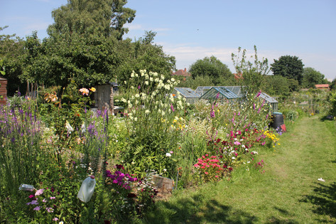 Ash Road Allotments floral plot.JPG